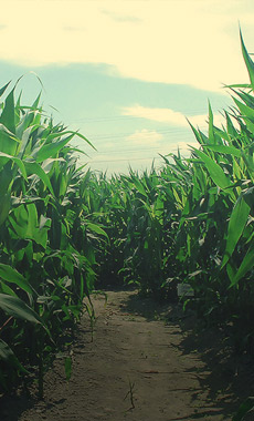 Corn Mazes in Montana and Yellowstone National Park